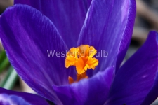 flower-record-dsc_0112-w