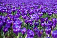 flower-record-dsc_0114-w