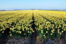 Narcis-Fortissimo-DSC_0164