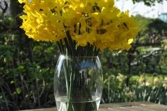Narcis Golden Bouquet