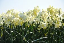 Narcis-Silver-Bouquet-DSC_027
