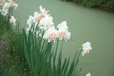 dsc_0114-1-spring-pride